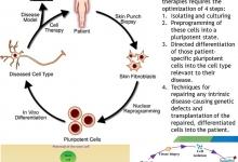regenerative medicine, tissue engineering